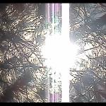 licht11